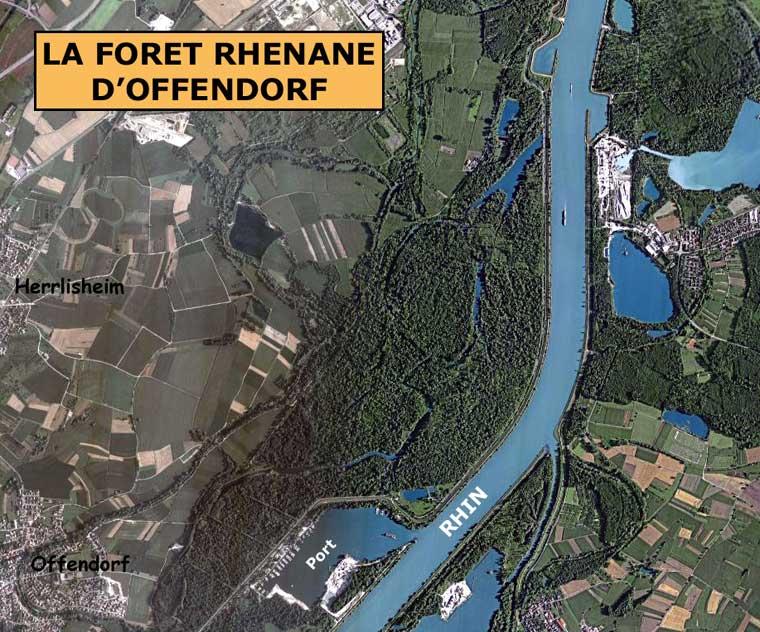 Offendorf: vue sur la forêt rhénane