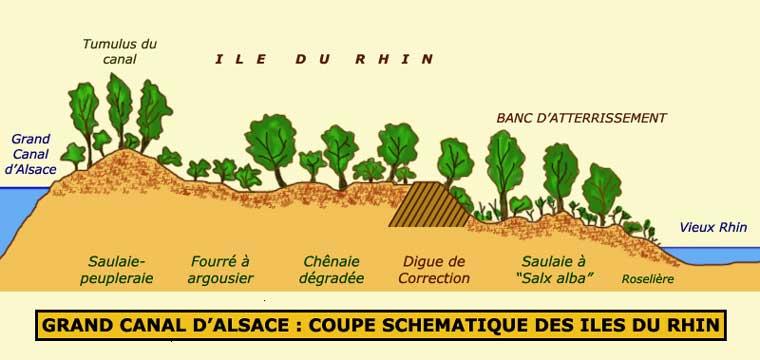 Coupe transversale des Iles du Rhin le long du Canal d'Alsace