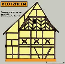 Blotzheim dans le Sundgau: maison archaïque de 1600 avec poutrage à motif d'arbre de vie. Maison aujourd'hui disparue. (La maison alsacienne)
