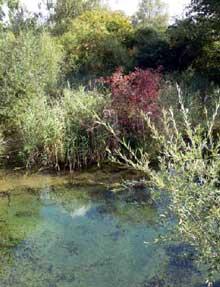 Le Taubergiessen et sa nature sauvage
