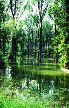 Le Taubergiessen, en voie d'envasement, est actuellement en voie de régénération et de revitalisation, l'objectif étant de faire que les eaux, de stagnantes deviennent courante comme ce fut le cas jadis, afin que revive l'environnement naturel