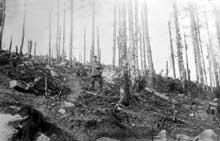 Le flanc est du Lingekopf en 1915