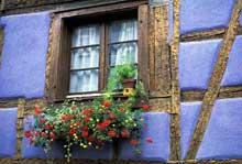 Il en faut peu pour donner à la maison alsacienne traditionnelle un charme exceptionnel: alliance de bleu, du blanc rideau,du poutrage rustique chêne et d'une brassée de fleurs ou domine le sang du géranium... (La maison alsacienne)