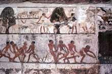 Saqqara: tombe de Nefer et de son père Ka: scène champêtre. (Histoire de l'Egypte ancienne)