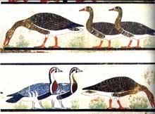 Les célèbres « Oies de Meïdoum » font partie d'une scène de capture d'oiseaux au filet, dans le mastaba de Néfermaât et d'Itet. Elles datent de l'époque de Snéfrou (IVè dynastie). Particulièrement frappants sont les tons naturels de la peinture, appliquée sur une couche de stuc couvrant elle-même un enduit de terre. Des plantes d'un vert tendre, aux fleurs rouges, évoquent le paysage des rives d'un étang. 1,73m x 0,28m. Le Caire Musée Égyptien. (Histoire Egypte ancienne)