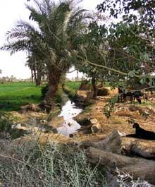 Le Fayoum. Canal d'irrigation. (Histoire de l'Egypte ancienne)