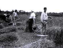 Moisson à la faux en France, vers 1890-1900. Une agriculture encore très traditionnelle