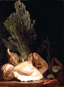 Antoine Berjon: Madrépores et coquillages. 1810. Huile sur toile, 75 cm x 56 cm. Lyon, musée des beaux-arts