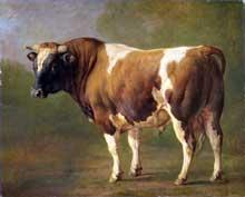 Jacques Raymond Brascassat: étude d'un bœuf. Huile sur toile, 42 x 53 cm. Amsterdam, Rijksmuseum
