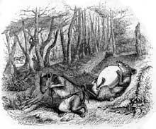 Grandville: les deux rats, le renard et l'oeuf. Illustration pour les fables de La Fontaine