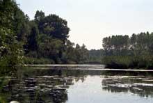 Rhinau: le Rhin sauvage..