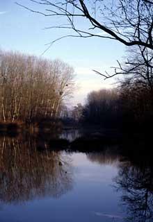 Schoenau: Bras mort du Rhin