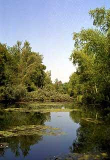 La nature sauvage: la forêt rhénane près de Schoena