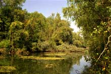 La nature sauvage: la forêt rhénane près de Schöna