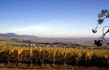 Les villages de Bennwihr-Mittelwihr vus du mémorial de Sigolsheim. (La maison alsacienne)