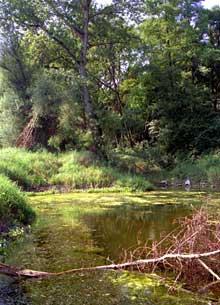 Fessenheim: le vieux Rhin sauvage. Un paradis naturel