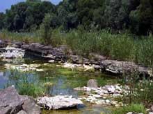 Kembs: le Rhin et son environnement sauvage