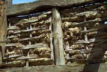 Torchis sur palançons tressés de noisetier… (La maison alsacienne)