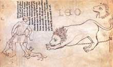 Villard de Honnecourt (actif entre 1225 et 1250 en Picardie). Lion. Dessin sur parchemin. 24 x 16cm. Paris, BN