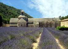 Sénanque: l'abbaye cistercienne. Vue générale