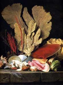Anne Vallayer-Coster (1744-1818): nature morte aux coquillages et au corail. Paris, Musée du Louvre
