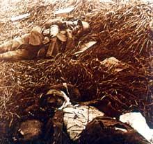 Cadavres de soldats allemands. Plateau de Craonne, 16 mai 1917, bataille du Chemin des Dames