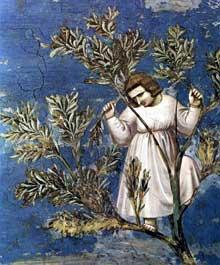 Giotto : Scènes de la vie du Christ: l'entrée à Jérusalem, détail. 1304-1306. Fresque, 52 cm de large. Padoue: la chapelle Scrovegni ou chapelle de l'Arena