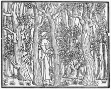 Alde Manuce (1450-1515): Poliphilus dans une forêt. 1499. gravure sur bois, 106 x 130 mm. Londres, British Museum. (Histoire de l'art - Quattrocento