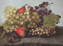 Giovanna Garzoni : nature morte