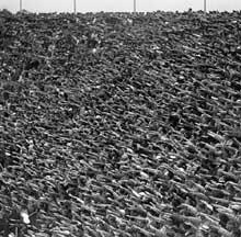 Berlin, Jeux olympiques de 1936