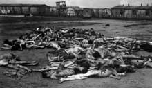 Bergen-Belsen : l'horreur absolue