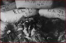 Auschwitz-Birkenau: cheveux de femmes entreposés au Canada
