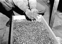Buchenwald: bagues prises aux déportés par les SS
