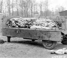 Buchenwald: cadavres lors de la libération du camp. Avril 1945