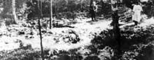 La forêt de Krepiec après la guerre